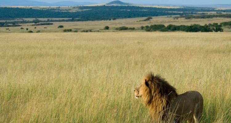 Kenya_Mara madmenmag safari