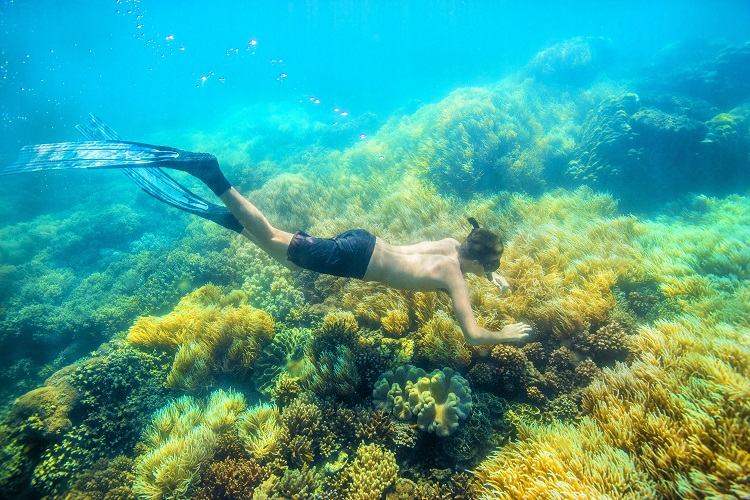 Airbnb Great Barrier Reef snorkeling